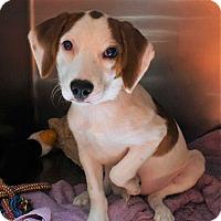 Adopt A Pet :: Harmony - Fort Madison, IA