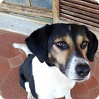 Adopt A Pet :: Keera - Toronto, ON