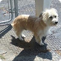 Adopt A Pet :: Cooper - Russellville, KY