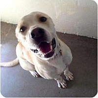 Adopt A Pet :: Marley - Winter Haven, FL