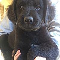 Adopt A Pet :: Blitz - Fort Valley, GA