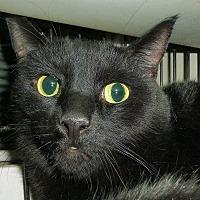 Adopt A Pet :: Andy - Carmel, NY