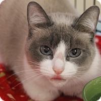 Adopt A Pet :: Stormy - Medina, OH