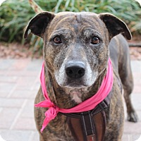 Boxer/Plott Hound Mix Dog for adoption in Las Vegas, Nevada - LITTLE ONE GRACIE