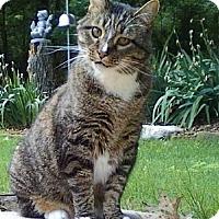 Adopt A Pet :: Sparky (5 month boy) - Witter, AR