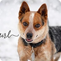 Adopt A Pet :: Cowgirl - Joliet, IL