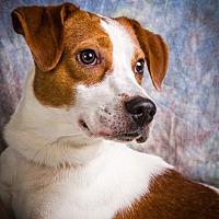 Adopt A Pet :: GIDEON - Anna, IL