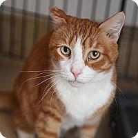 Adopt A Pet :: Wyatt - Kanab, UT