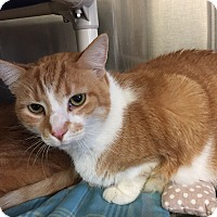 Adopt A Pet :: Laddie -FEE WAIVED - Seville, OH