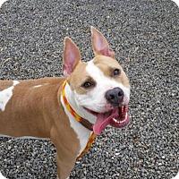 Adopt A Pet :: Fiona - Cape Girardeau, MO