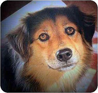 English Shepherd Mix Dog for adoption in Concord, North Carolina - TASHA