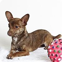 Adopt A Pet :: Coco - Oakland, CA