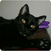 Adopt A Pet :: Pixie Chic - lake elsinore, CA