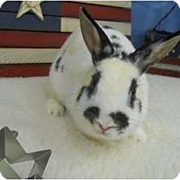 Adopt A Pet :: Blossom - Roseville, CA