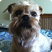 Adopt A Pet :: GUS - ADOPTION PENDING! - Salem, OR