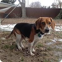 Adopt A Pet :: Sam - Spring City, TN