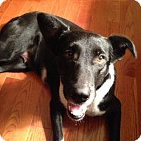 Adopt A Pet :: Miss Olivia - Austin, TX