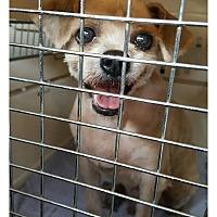 Adopt A Pet :: Pure - Oakton, VA