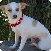 Adopt A Pet :: Skittles - Tucson, AZ