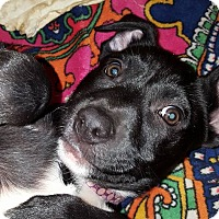 Adopt A Pet :: Quinn - Broken Arrow, OK