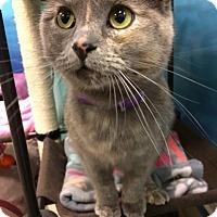Adopt A Pet :: Star - Byron Center, MI