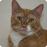 Adopt A Pet :: James - Fountain Hills, AZ