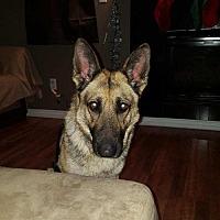 Adopt A Pet :: Zelda - Denver, CO