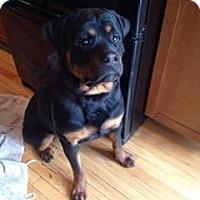 Adopt A Pet :: Gus - Rexford, NY