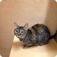 Adopt A Pet :: Lizzie - East Stroudsburg, PA