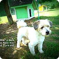 Adopt A Pet :: Tee Rue - Gadsden, AL