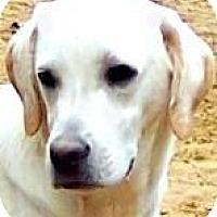 Adopt A Pet :: REXX - Wakefield, RI
