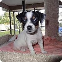 Adopt A Pet :: Barkley (FL) - Gilford, NH