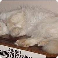 Adopt A Pet :: Hermione - Franklin, NC