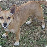 Adopt A Pet :: TINY - Torrance, CA