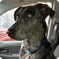 Adopt A Pet :: Charlie -Prison Obedience Trai - Hazard, KY