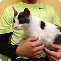 Adopt A Pet :: Elvis - Lake Charles, LA
