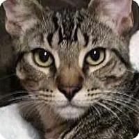 Adopt A Pet :: Nibbles - Irvine, CA