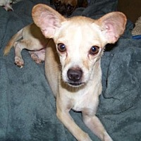 Adopt A Pet :: Whitman - Glendale, AZ