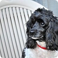 Adopt A Pet :: LUCKY - Elk River, MN
