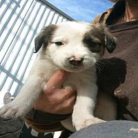 Adopt A Pet :: Brandy - Girard, GA