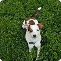 Adopt A Pet :: Josephine aka Josie - Omaha, NE