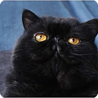 Adopt A Pet :: Bentley* - Columbus, OH