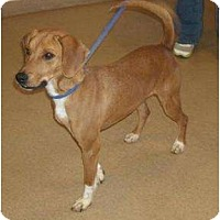 Adopt A Pet :: TannerPENDING - Toronto/Etobicoke/GTA, ON