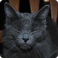 Adopt A Pet :: Hailey - Waxhaw, NC