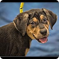 Adopt A Pet :: Aurora - Wickenburg, AZ