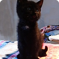 Adopt A Pet :: Winifred - N. Billerica, MA