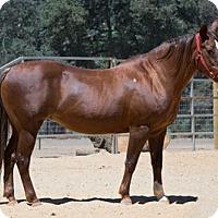 Adopt A Pet :: Fancy - El Dorado Hills, CA