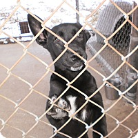 Adopt A Pet :: Bubbles - Wallaceburg, ON