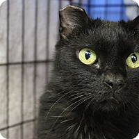 Adopt A Pet :: Gobstopper - Chicago, IL