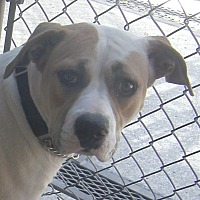 Adopt A Pet :: Destiny - Lodi, CA